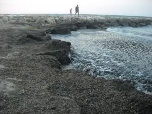 alghe a s.cataldo