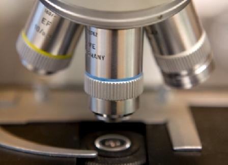microscopio