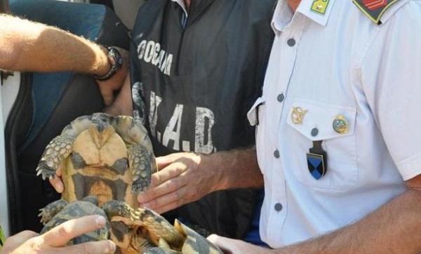 tartarughe sequestrate