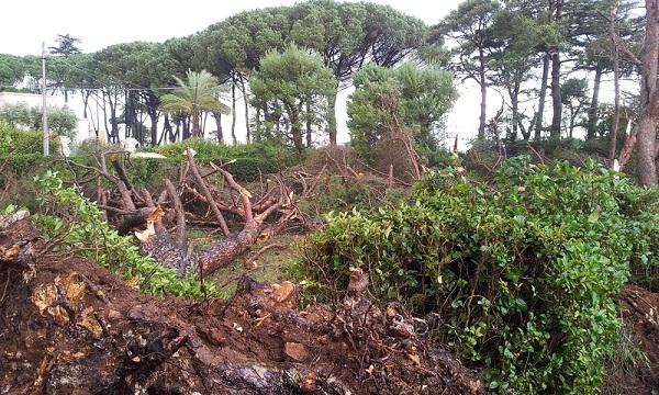 danni tromba d'aria nella Selva di Fasano