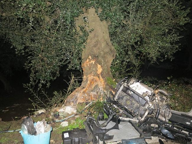 schianto contro albero d'ulivo 3