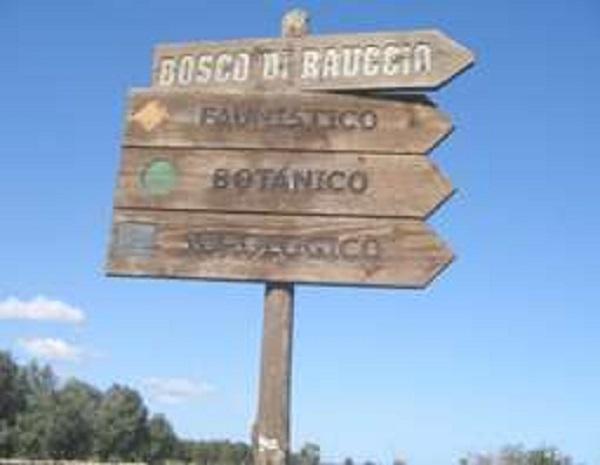 Bosco di Rauccio