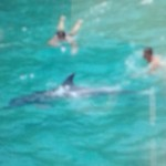 delfino-roca4