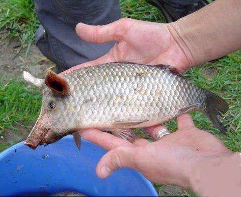 pesce-porto-cesareo