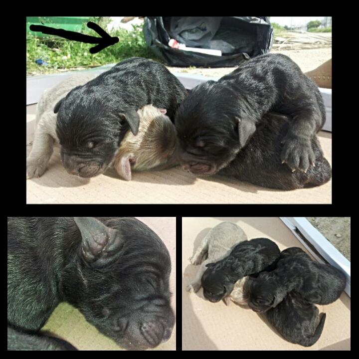 foto cani maltrattati