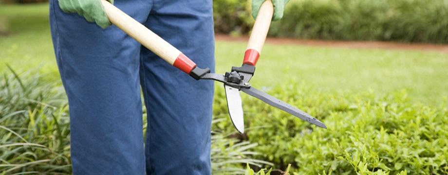Perseguita e violenta l 39 ex amante nei guai un giardiniere for Donare un giardiniere